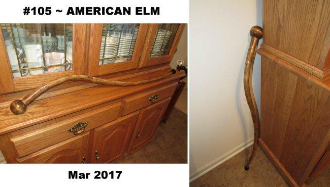 105 American Elm Mar 2017 (7).jpg