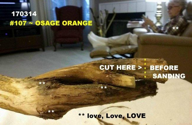 170314 e 107 Osage Orange (1).jpg